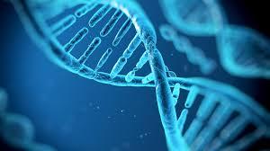 DNA20
